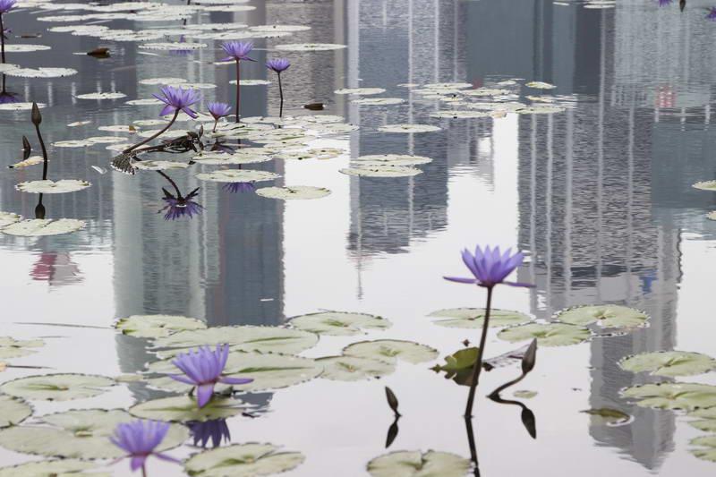 Йога Айенгара: видео шестого комплекса